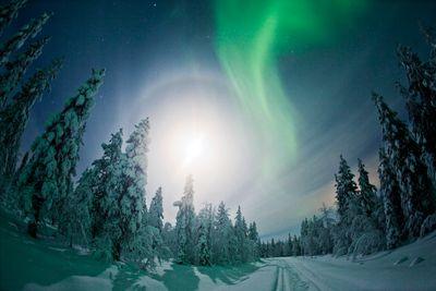 Aktivreise Huskys, Rentiere und Nordlichter
