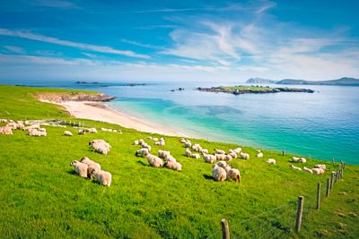 TUI Tours: Busreise Liebenswerte Insel - Tour B mit Dublin Verlängerung