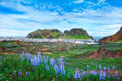 Schiffsreise Naturwunder Grönlands Tour B mit MS Ocean Diamond ab Keflavik/bis Reykjavik inkl. Hotelübernachtung in Reykjavik