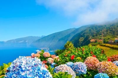 Busreise Blumeninsel Madeira