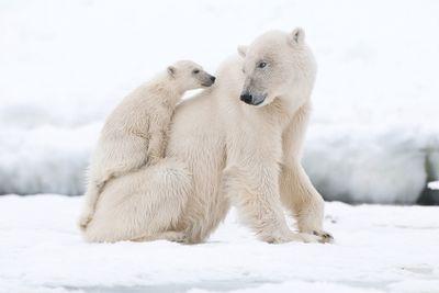 Schiffsreise Rund um Spitzbergen - Im Land der Eisbären ab/bis Longyearbyen